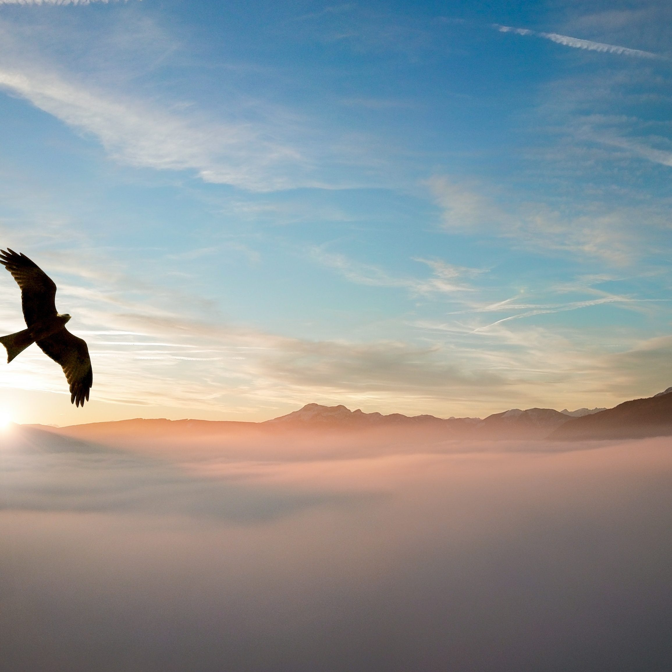 Eagle flying above the clouds